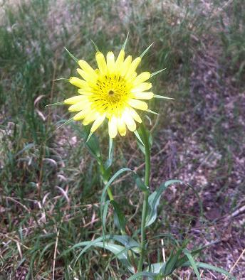 cornflower_06-10-2013