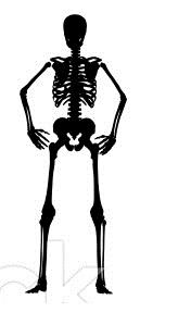 Stand_Skeleton_hips
